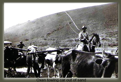 Oxen towing vehicle