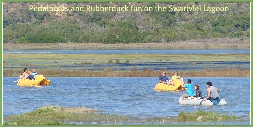paddleboats & rubberducks