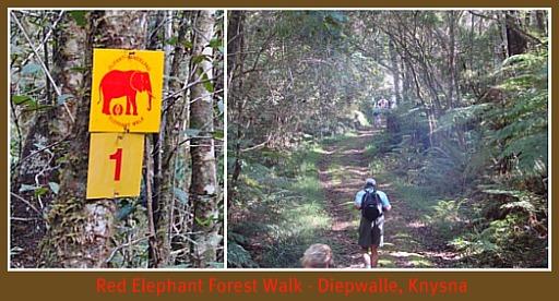 Diepwalle State Forest
