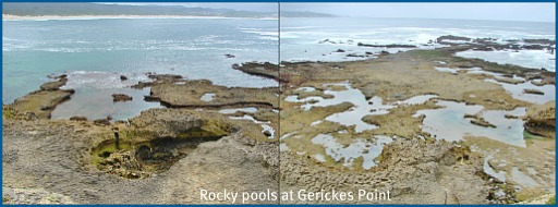 Exposed areas at Gerickes Point at low Spring tide