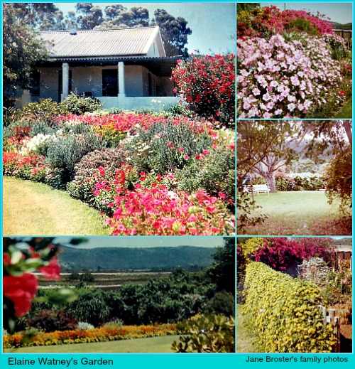 Elaine Watney's well tended garden