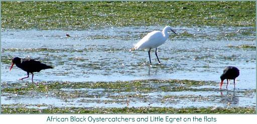 waterbirds ooon Thesen Island