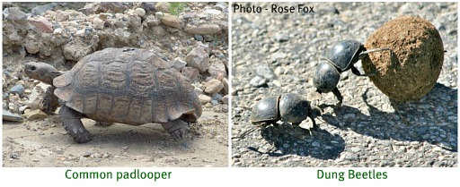 Small creatures that are part of the biodiversity of the Addo