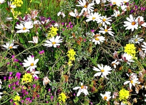 Yellow, White and Pink Mix of Wildflowers